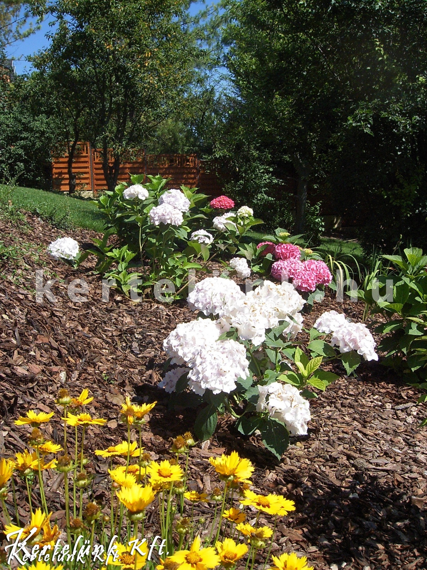 Szárazságtűrő, színes virágok.