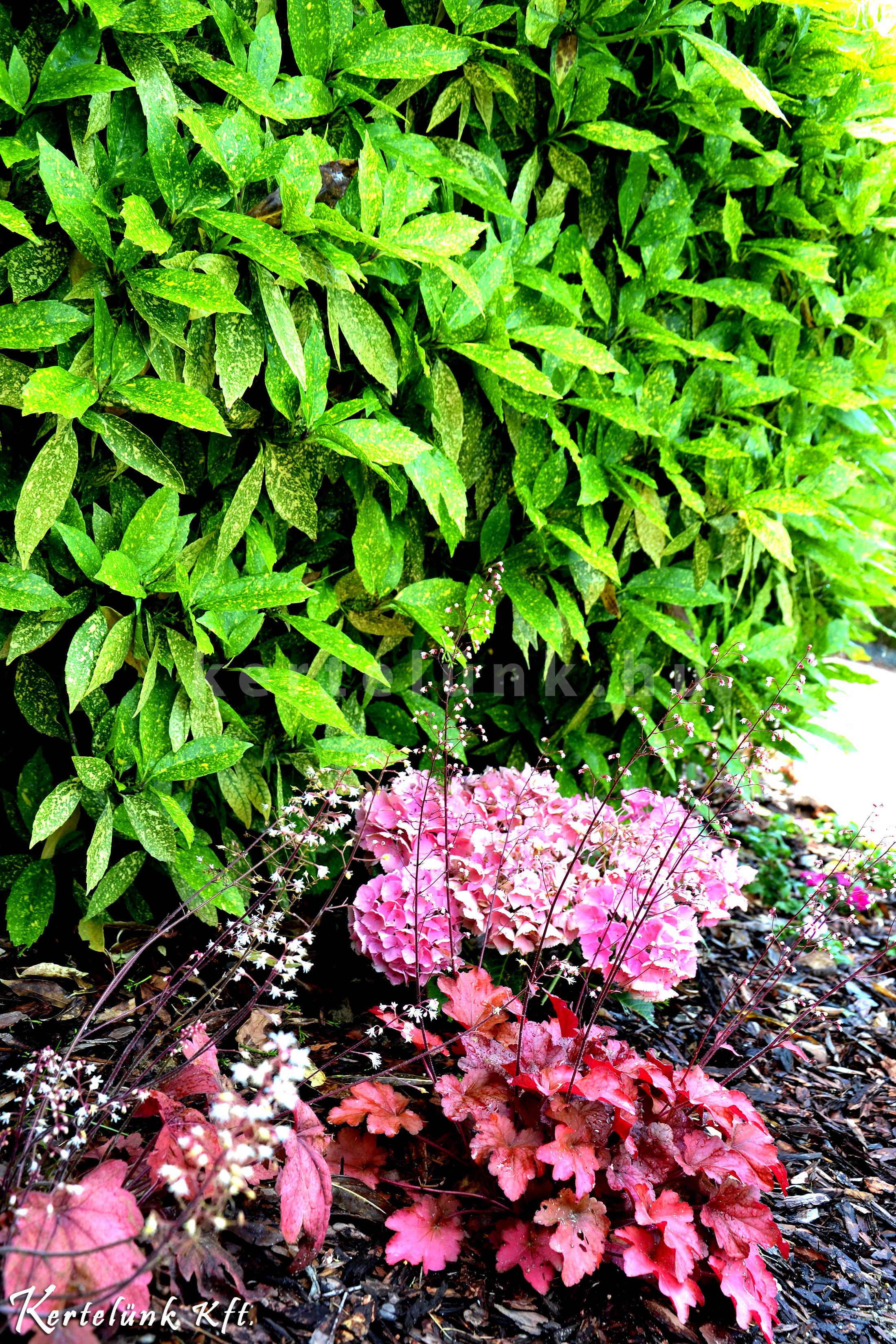Mindig odafigyelünk arra, hogy szinte egész évben legyen virágzó növény.