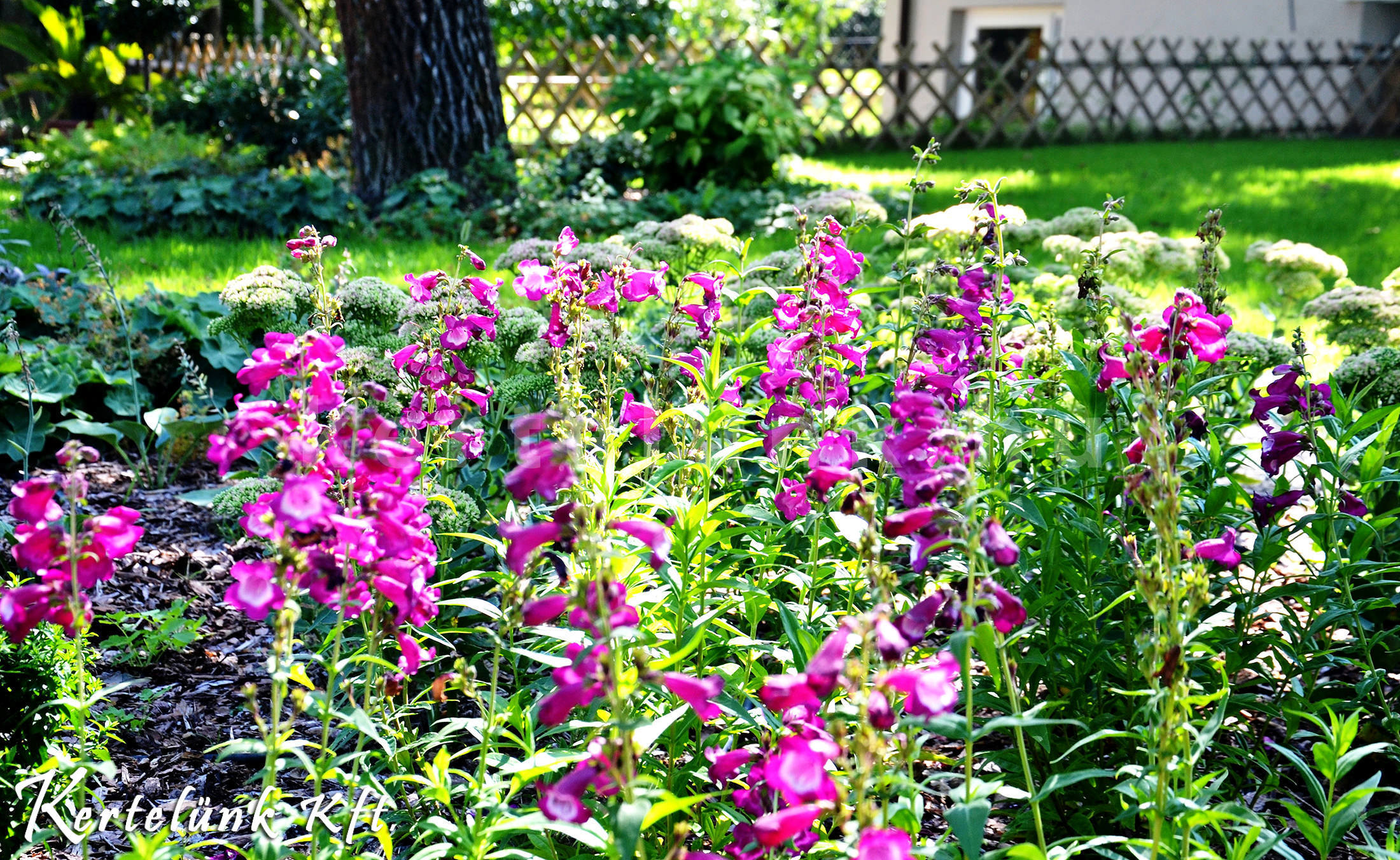 És ismételten a sok, színes virág, melyet sose lehet megunni.