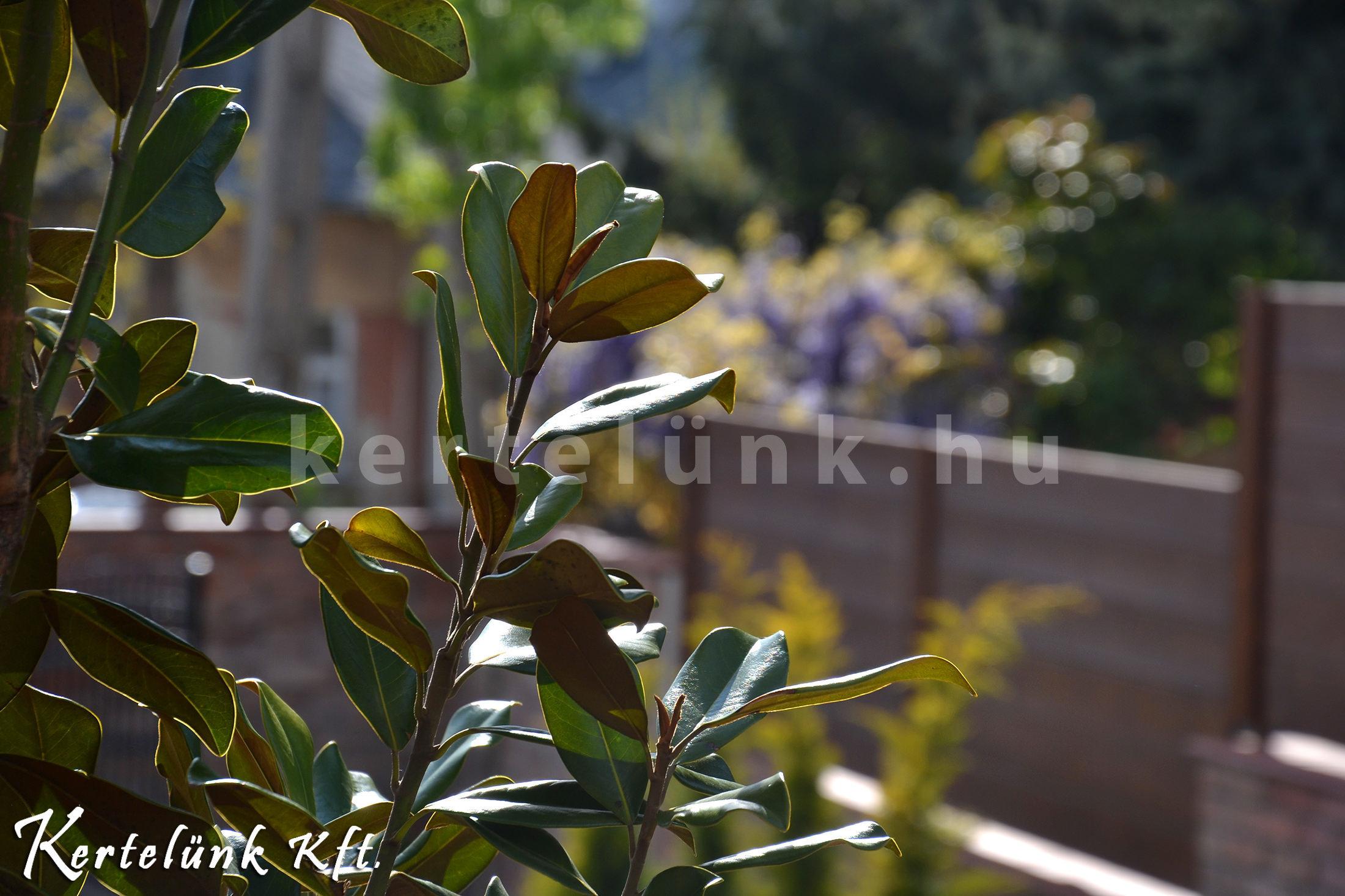 Kellemes pillanatkép egyik kedvenc mediterrán növényünkről.