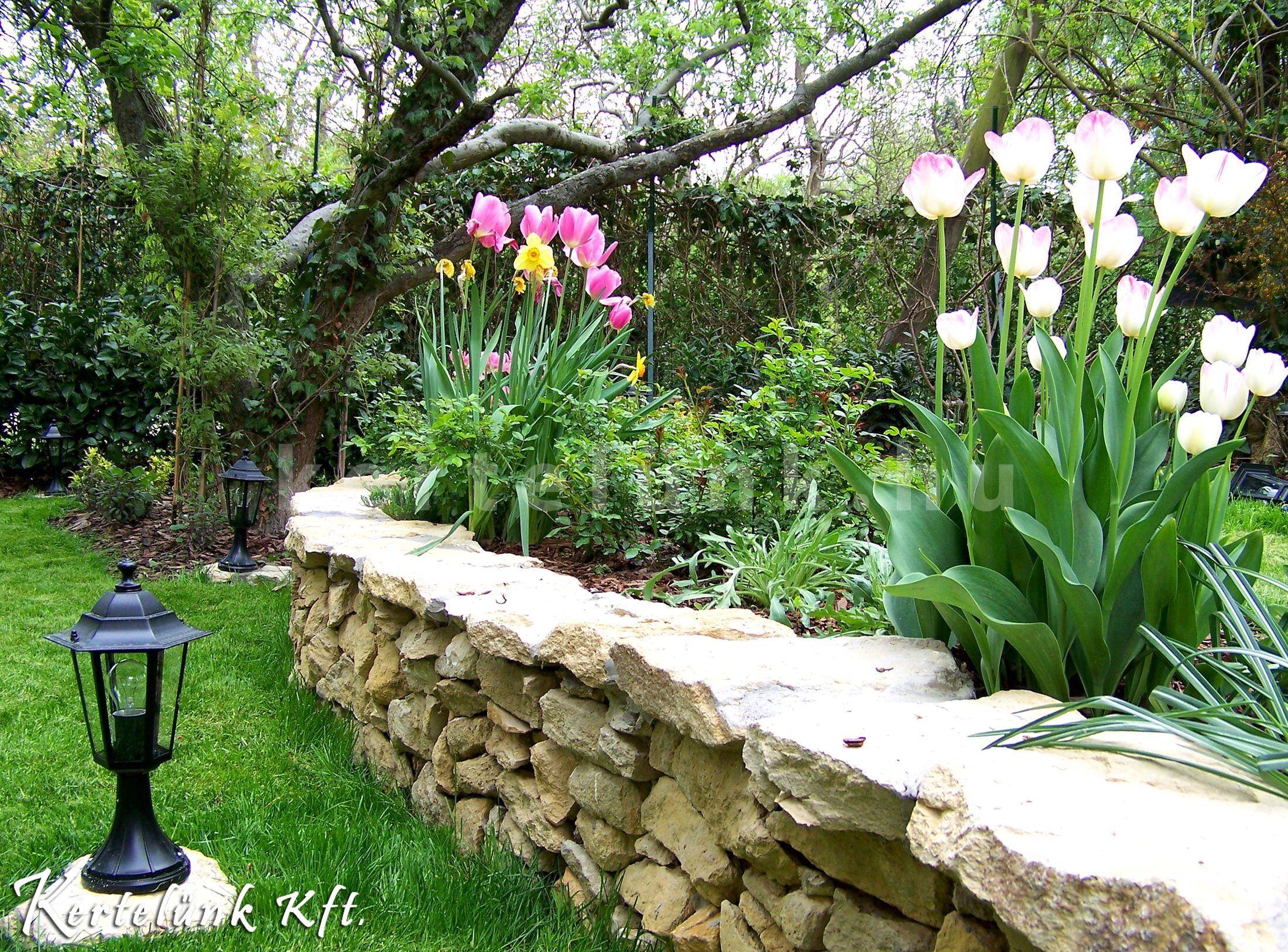Kora tavasszal nyíló tulipánok.