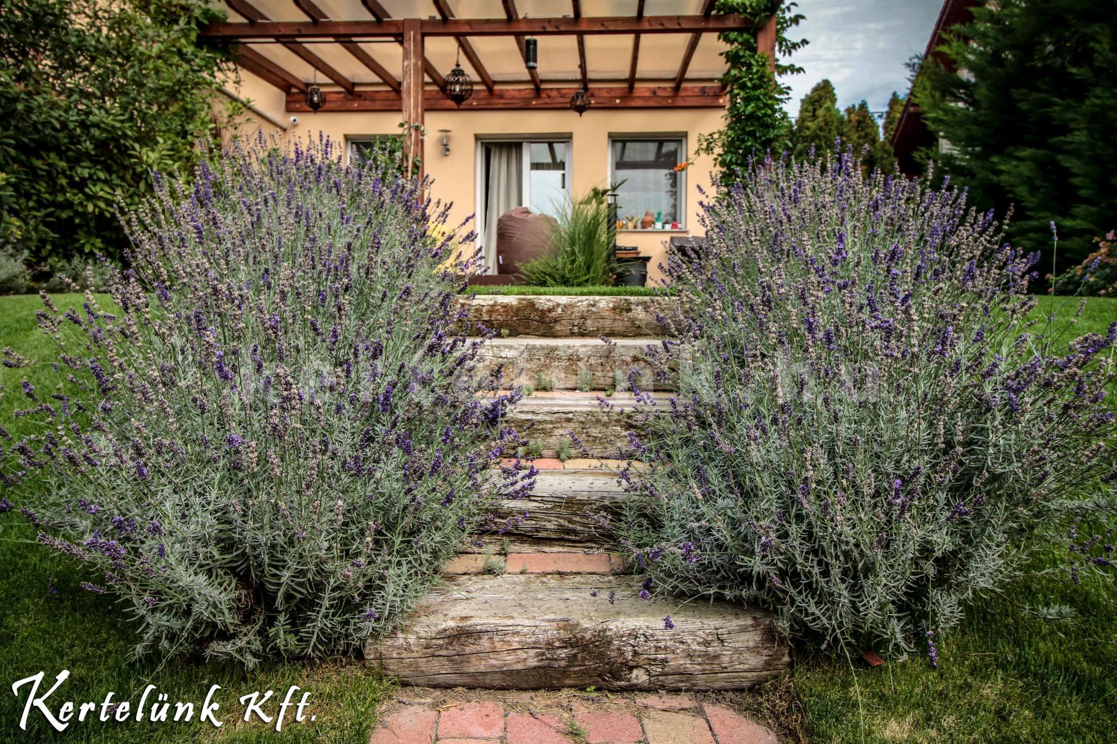 Mediterrán kert terméskő lépcsővel és levendula bokrokkal.