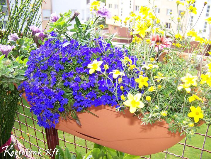 A növénydekorációt rendszeresen locsolni kell.