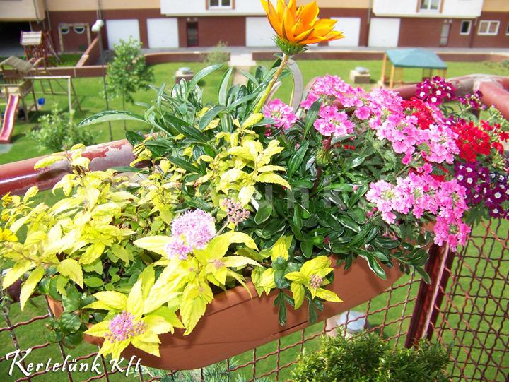 Szép színes növénydekoráció.