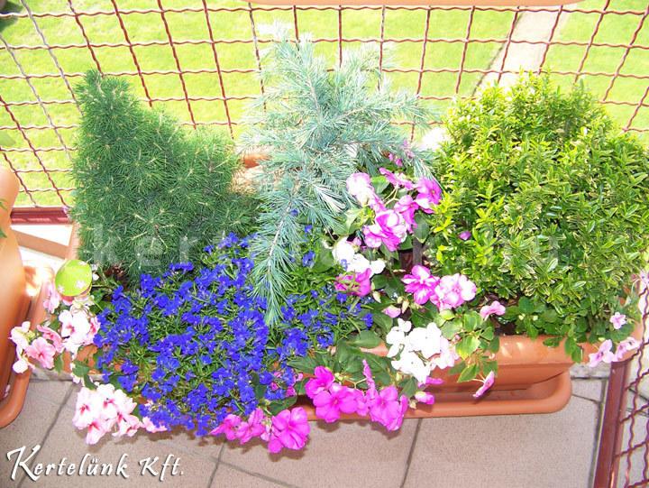 Kisméretű erkélyekhez kissebb, színes növényeket alkalmazunk.