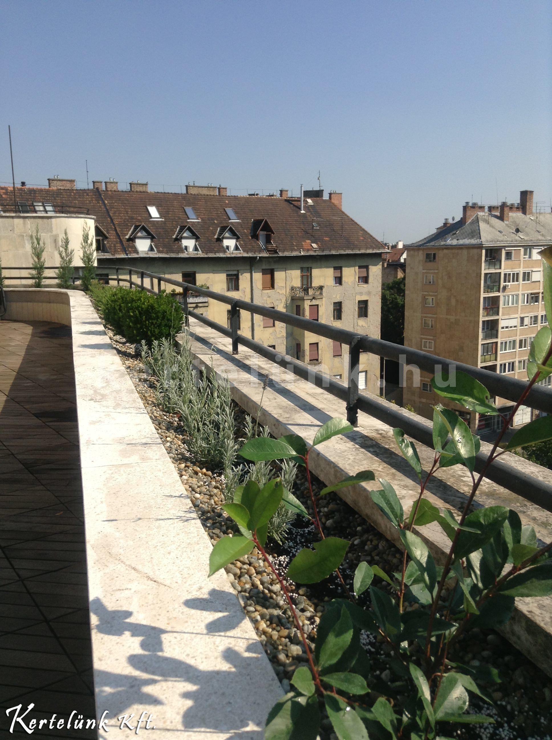 Sövény jellegű növényzet egy belvárosi tetőtéri terasz esetében.