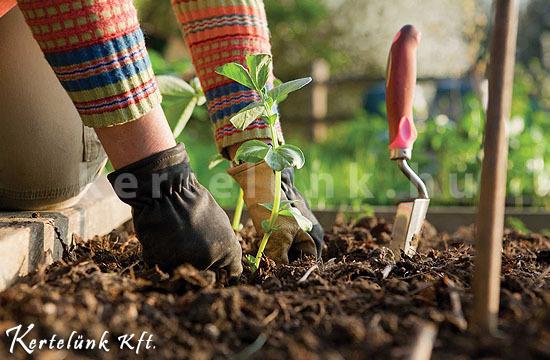 Sok növényt ősszel kell ültetni.