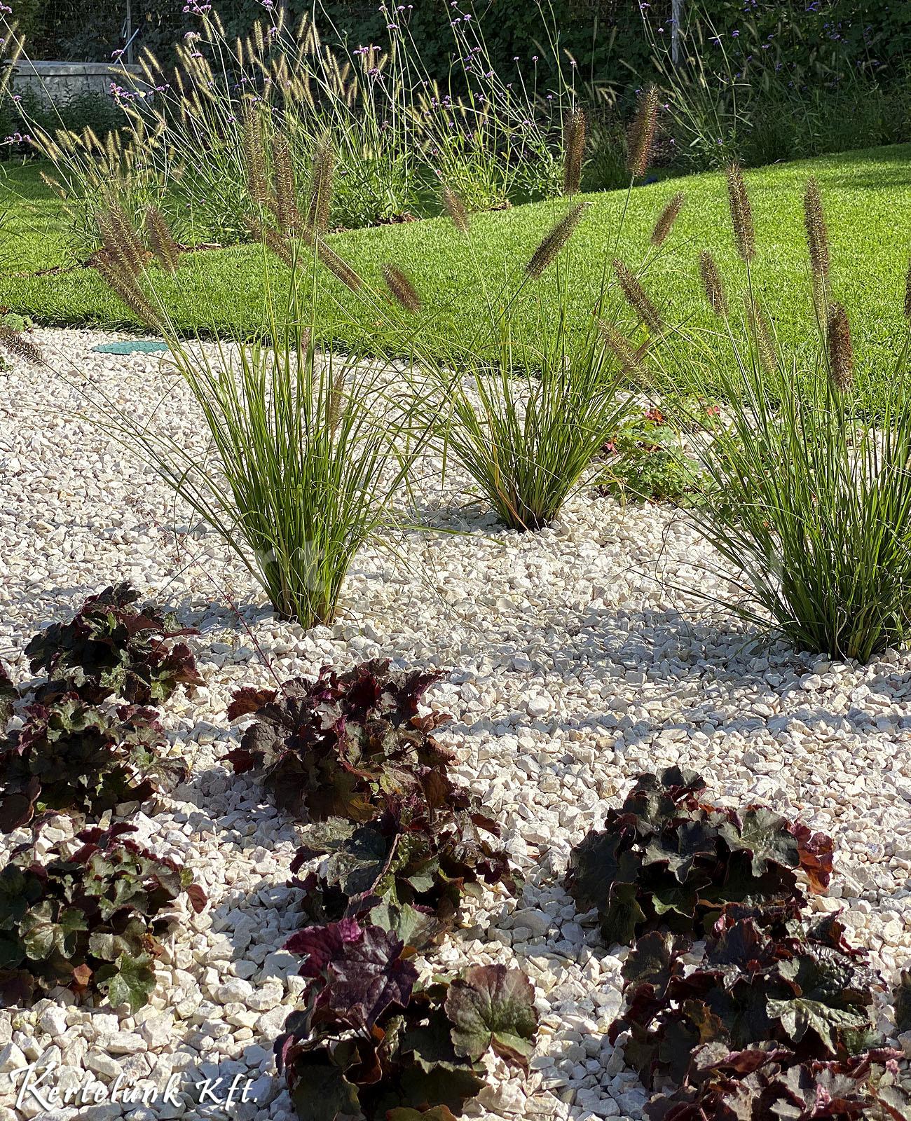 Tűzgyöngyvirág és a tollborzfű az ágyások fő növénye.