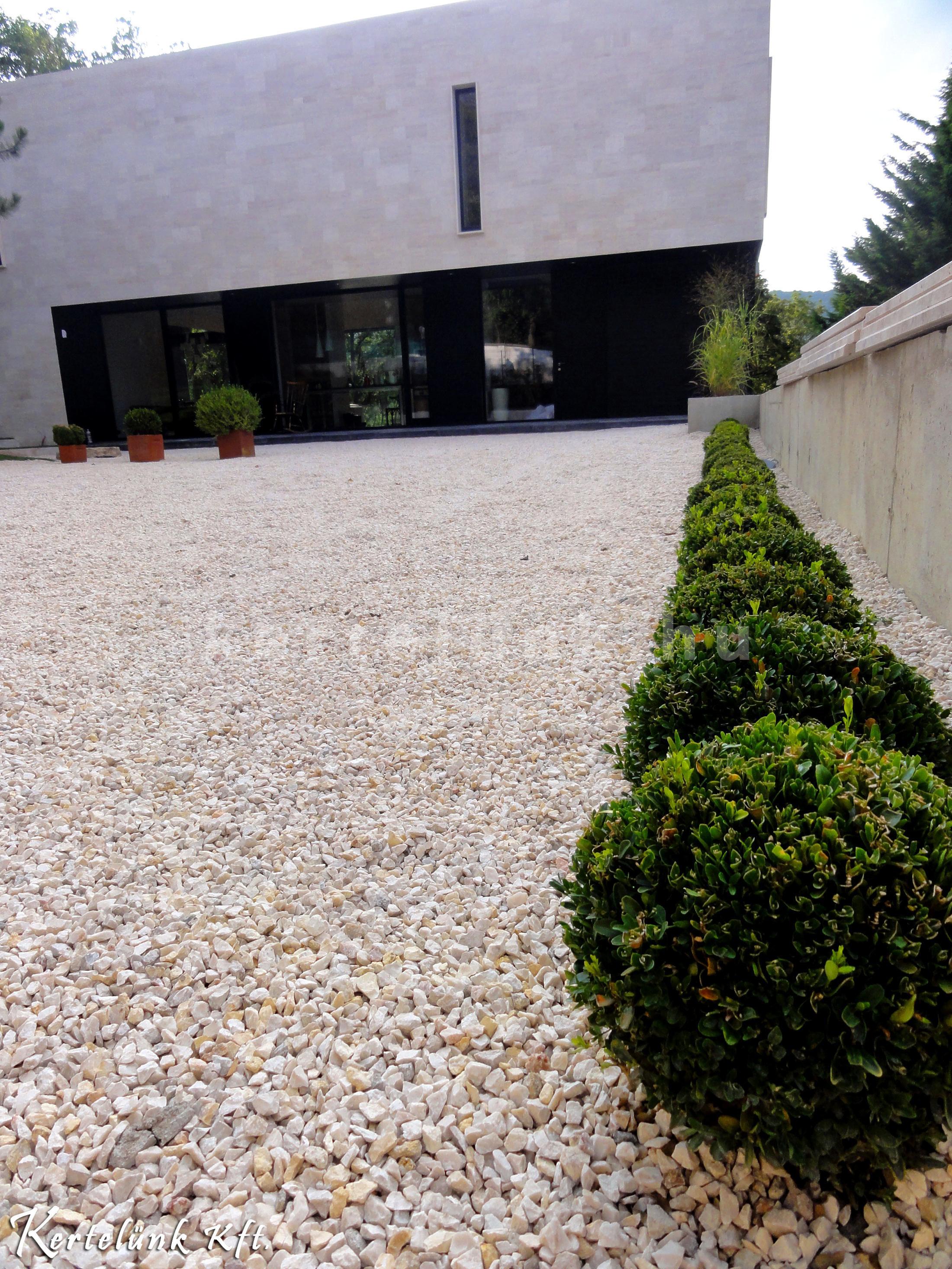 A képen látható puszpáng is sok modern stílusú kertben felfedezhető.