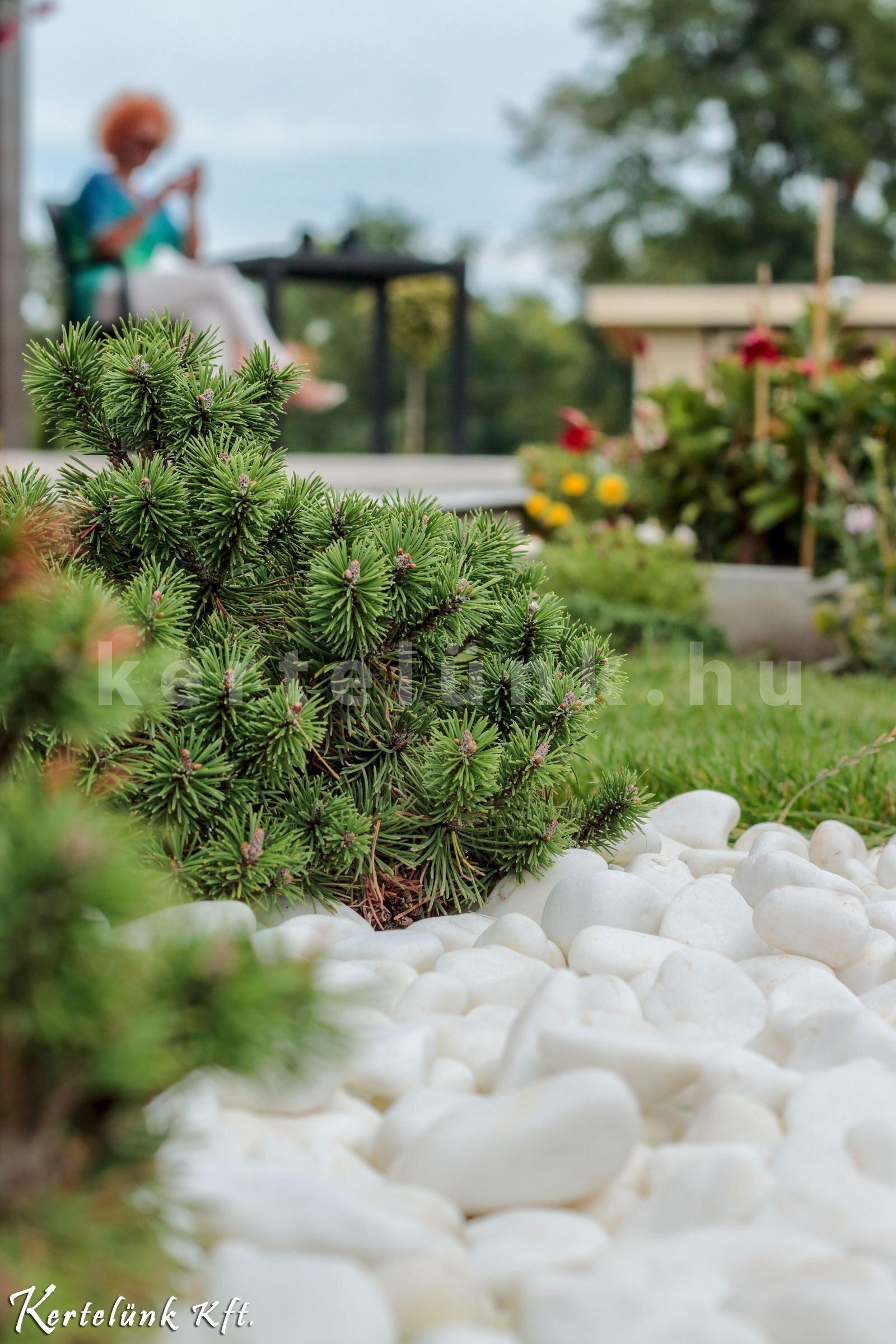 Modern design a kertben - Kertelünk