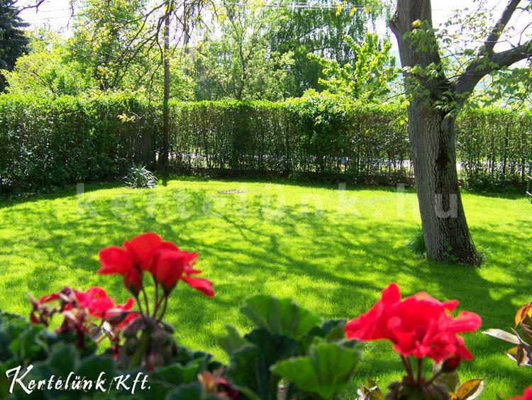 A kert végébe egy nagyobb alapterületű füves felület került.