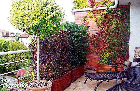 Fontos a balkonnövények helye a teraszon. Ne ültessünk semmit se túl napos helyre.