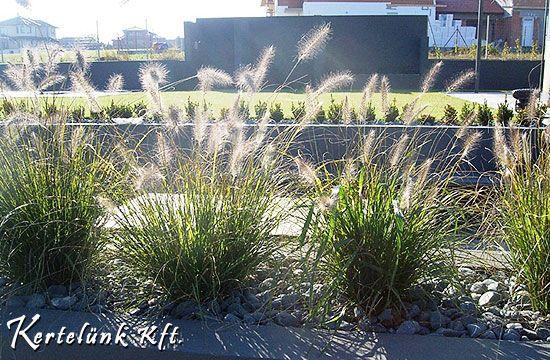 A másik jellegzetes növény a díszfű