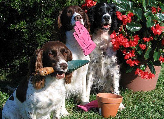 Csapatmunka a tavaszi kertépítés