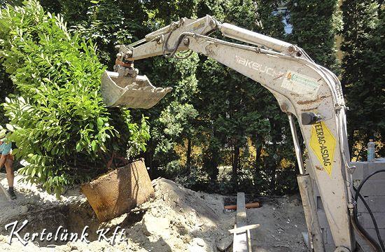 Koros fákat, cserjéket gépekkel ültetünk el.