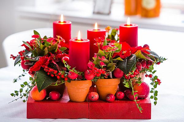 A karácsonyi készülődés jelképe a mikulásvirág