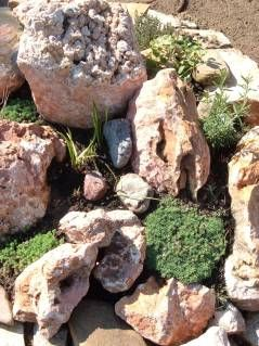 Érdemes olyan növényt ültetni mely bírja a meleget és szárazságot