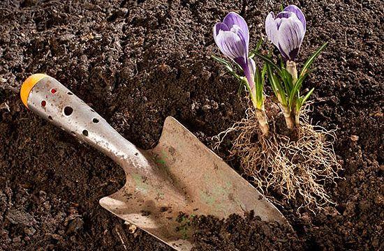 Ültetéskor is figyeljünk oda a növények trágyázására