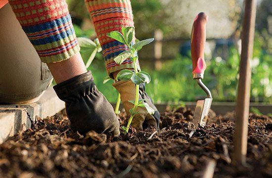 Sok növényt ősszel kell elültetni