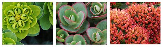 A folyamatos felmelegedés miatt egyre népszerűbbek a szárazságtűrő növények.