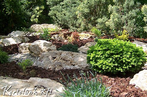 Sziklekerti fénykedvelő növények és fenyőmucs