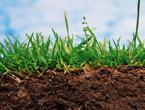 Jó minőségű talaj