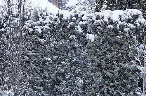 és télen a hófúvásban