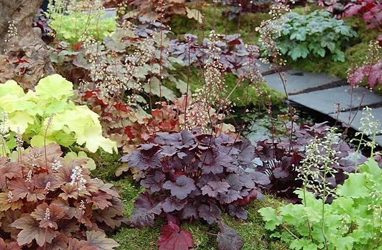 Tűzgyöngyvirág is bekerülhet a modern kertekbe