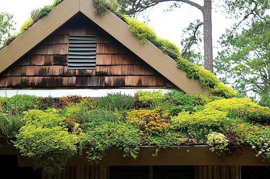 egy házilag készített zöldtető